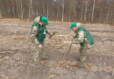 Прикордонники Сумського загону взяли участьв загальнодержавній акції «Створюємо ліси разом»